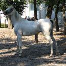 VITA - predstavitev arabskih konj, Stožice 2005