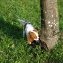 Kdo je lulal po mojem drevesu?!
