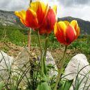 ikebane in rože