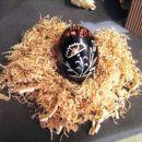 plastično jajce obdelano z olfa nožem