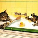 Kad je Stojan zauzet poljoprivrednim radovima, e onda mačor mora sâm da se nasapunja.