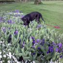 grem povohat tulipane