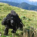 hov, hoh, hov, Nela je srečna na planini Krstenica