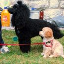 Nela in Bora na pikniku.