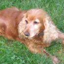 to je pa moja pokojna psička Flora, imela je 14 let, potem pa smo jo dali uspavat, saj je