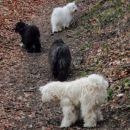 Dve črni psici in dva bela psa - jing, jang