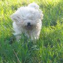 Med travo