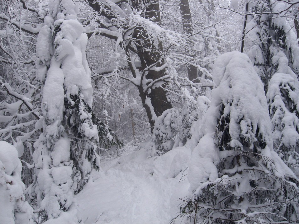 Vinska gora-Ramšakov vrh(970m)-Radojč-Tuševo- - foto povečava