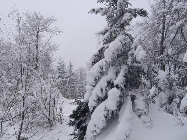 Vinska gora-Ramšakov vrh(970m)-Radojč-Tuševo- - foto