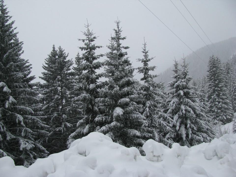 5.zimski pohod Žekovec-Mozirska koča(Golte)-8 - foto povečava