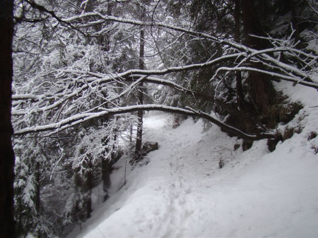 5.zimski pohod Žekovec-Mozirska koča(Golte)-8 - foto