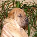 2.4.2008 - Oliver raste