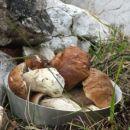 hrana v divjini