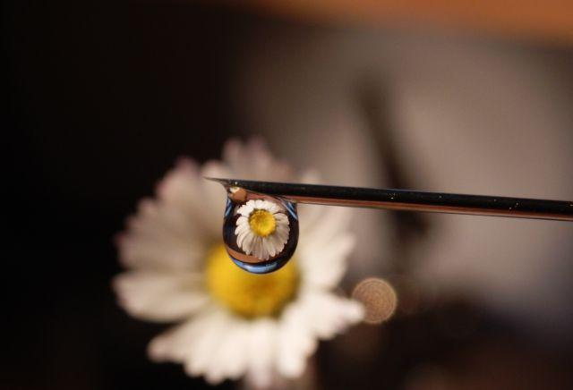 Makro fotografija - foto