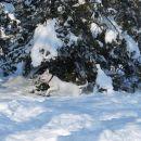 Jupi, sneg...