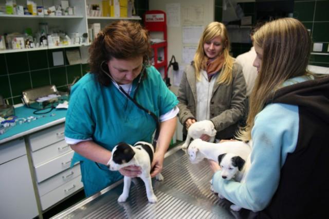Pri veterinarju - cepljenje - foto
