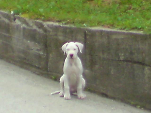 Rocky-jacomo 2-3 mesece - foto