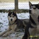 Thor&Luna