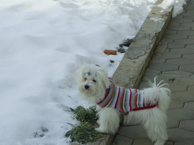 Zima, zima bela... - foto