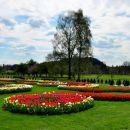 Razstava tulipanov