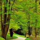 sprehod po gozdu
