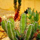 Razstava kaktusov