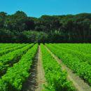 nasadi vinogradov