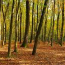 Bukovniški gozd