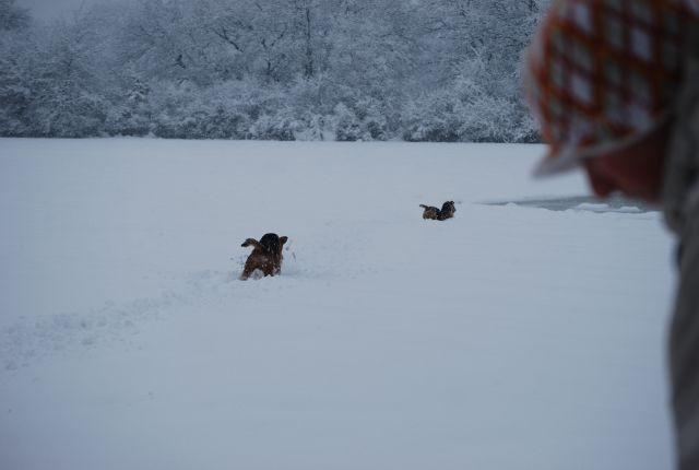 Venny, Jack & Lora 4.12.2010 - foto