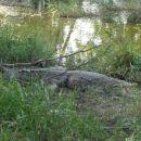 Krokodilfarm - Guama