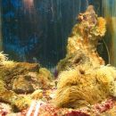 akvarij v Pulju