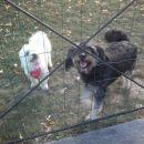 zdaj sm pa že v ograji z znano psičko, kot da sm ena mala ovčka