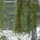KK ribnik