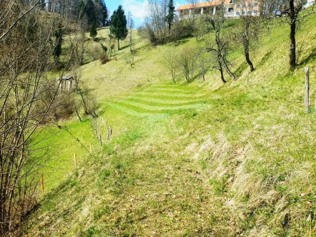 Brananje travnikov 2020 - foto