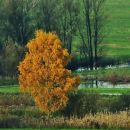 jesen na Barju