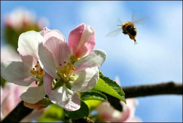 Zdaj pa je pomlad  - foto