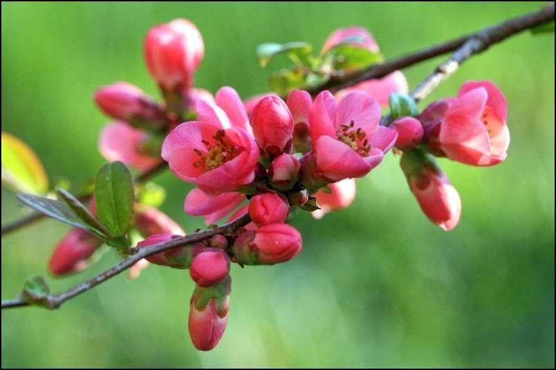Zdaj pa je pomlad  - foto povečava
