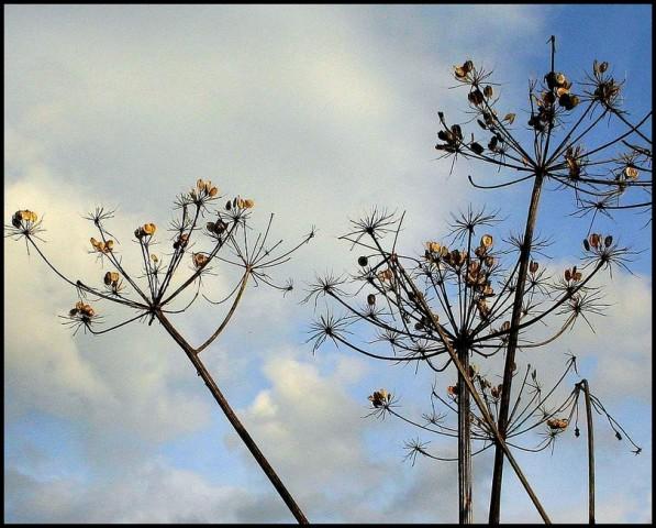Seeds (2)