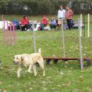 Dobrodelna agility tekma za Selce - 27.10.200
