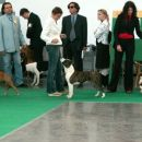 World Dog Show-Limanorth Coming Winning T.&Cha-Cha