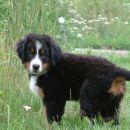 Lenny v travi