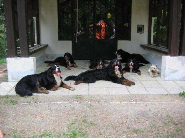 Srečanje naših mladičkov, 13.5.2006 - foto