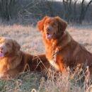 Bagira (levo) in Baloo (desno), bratec in sestrica na pocitnicah
