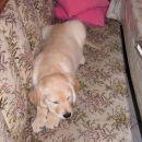 to pa je popolno pasje življenje!!!