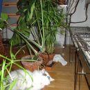 zadnja žrtev tropske divjine za kavčem