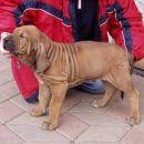 Bark, star 8 tednov