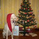 najlepši božiček