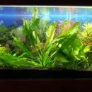 akvarij januar 2007