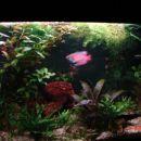 60l akvarij 1