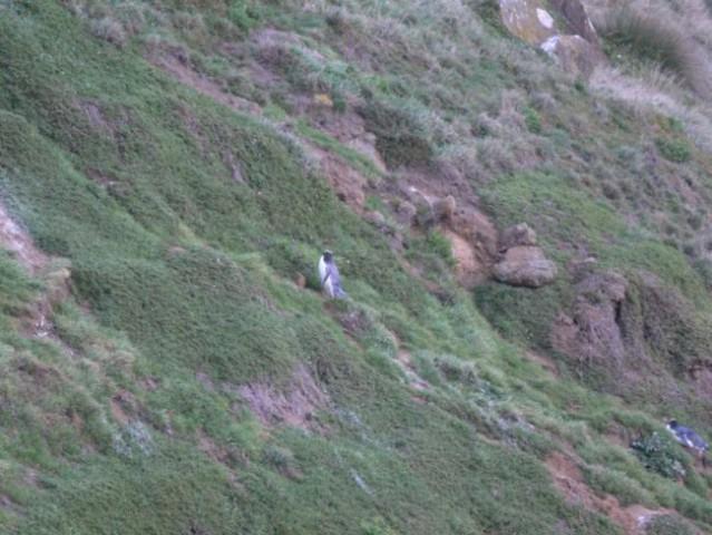 4.5.-8.5.2006, Kaikoura, Hanmer Springs, Akar - foto